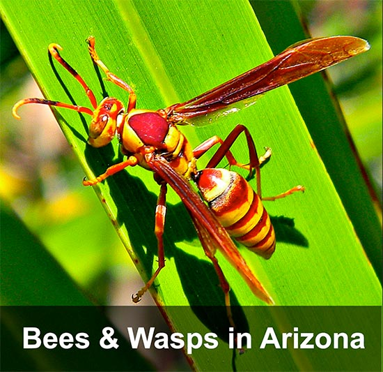 Bees Wasps & Hornets .. Oh My!